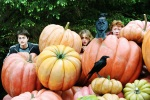 harry potter hermione granger ron weasley hp4 pumpkin hide 6x4