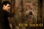 Jacob Black Wolfx 480x320