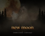 new moon poster jacob black wolf pale 1280x1024