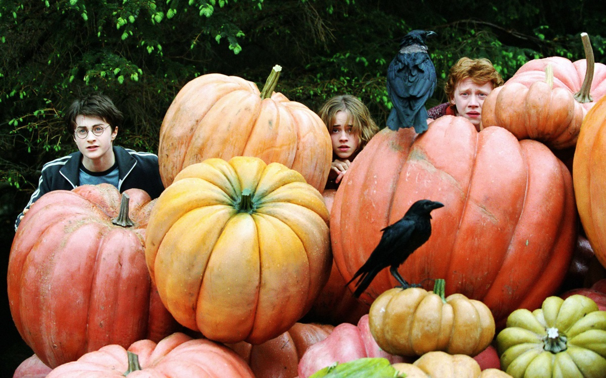 harry potter hermione granger ron weasley hp4 pumpkin hide 1920x1200