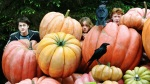 harry potter hermione granger ron weasley hp4 pumpkin hide 2560x1440