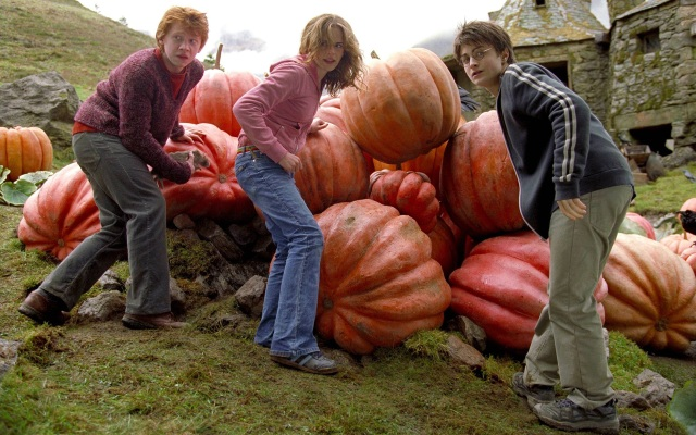 ron weasley hermione granger harry potter hp3 pumpkins 1920x1200