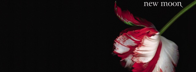 New Moon Cover Facebook Timeline Cover